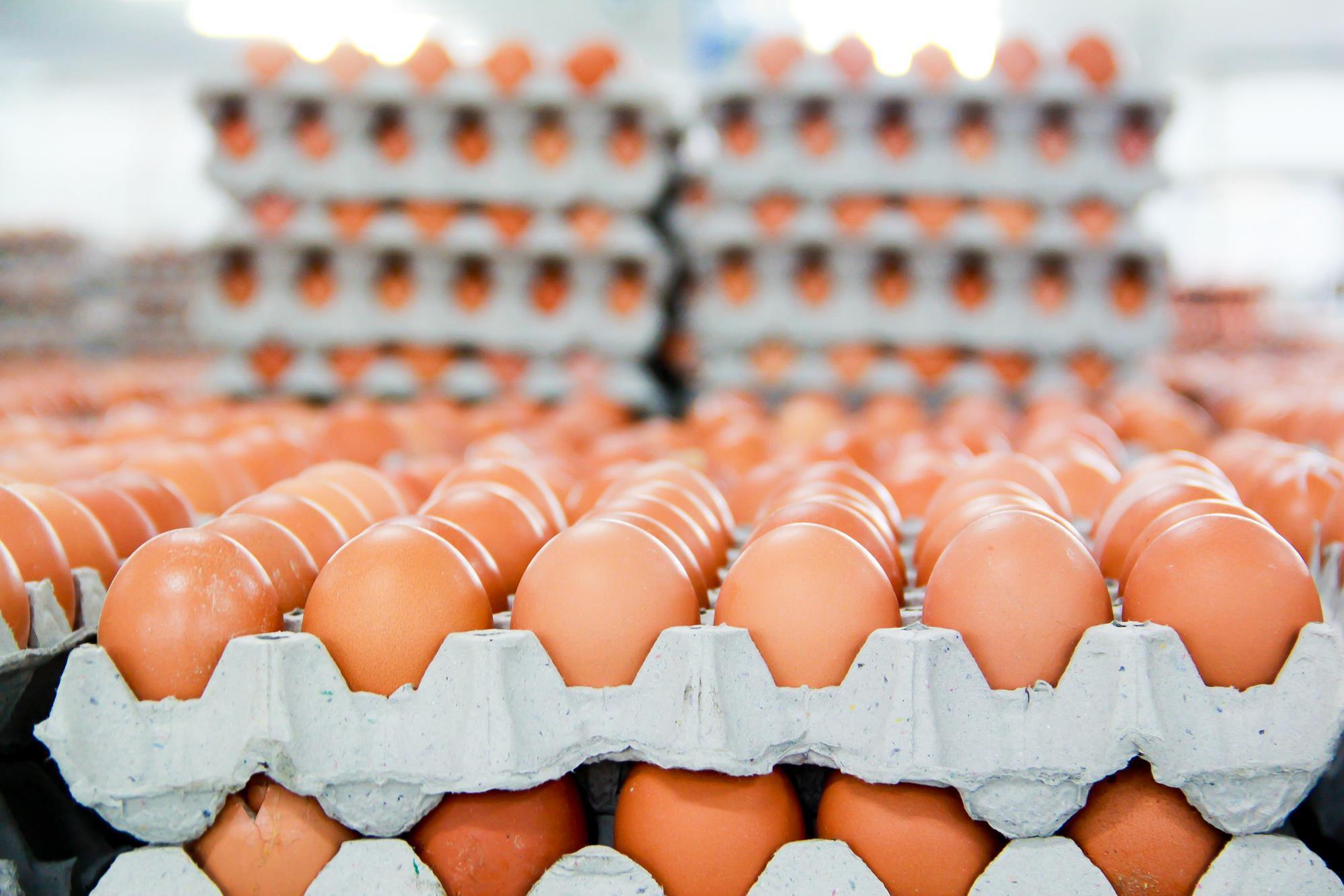 0601 Hạn ngạch thuế quan muối, trứng gia cầm nhập khẩu 2021